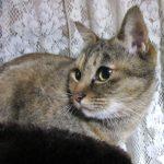 猫は餌・フードの好き嫌いが激しい!対処法と与え方