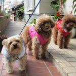 犬の多頭飼いの条件は、相性が肝心。喧嘩の心配。メリットとデメリットは?