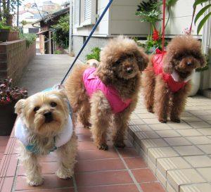 犬たち散歩前