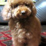 かわいい愛犬に自宅でシャンプー。きめ細やかな配慮でワンちゃんも安心。