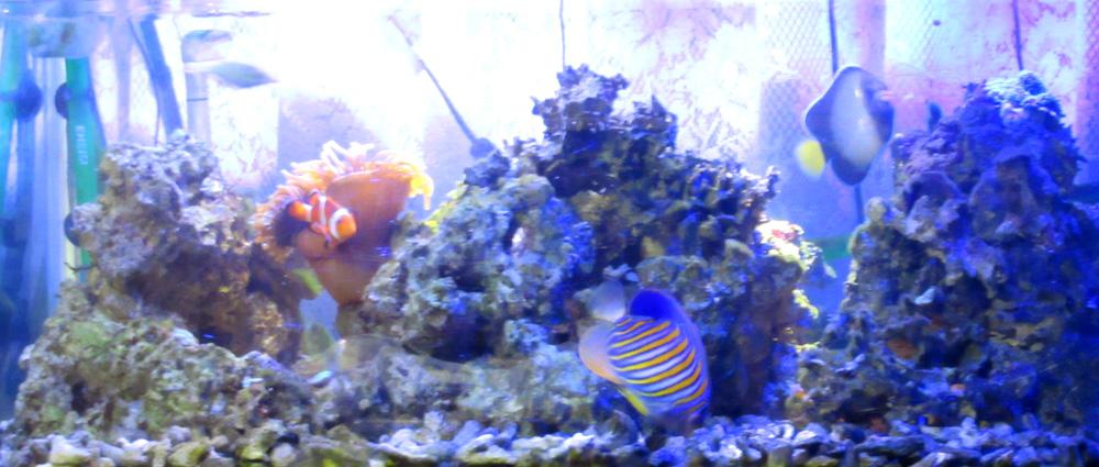 海水魚水槽全景