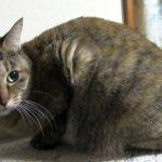 猫アレルギーのミギーが薬に頼らず食で症状を克服した対処法