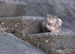 猫 ブログアフィリエイト