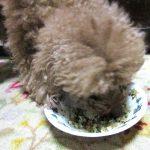 愛犬に手作りご飯【健康一番ダイエット】で簡単ごちそうレシピ。