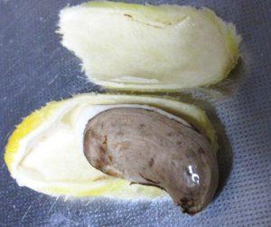 マンゴーの種、外皮剥いた