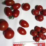 家庭菜園ミニトマト、8品種を食べ比べてみました。