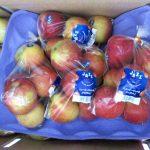 ニュージーランドのリンゴは日本の夏が旬!シャキシャキでジューシー!