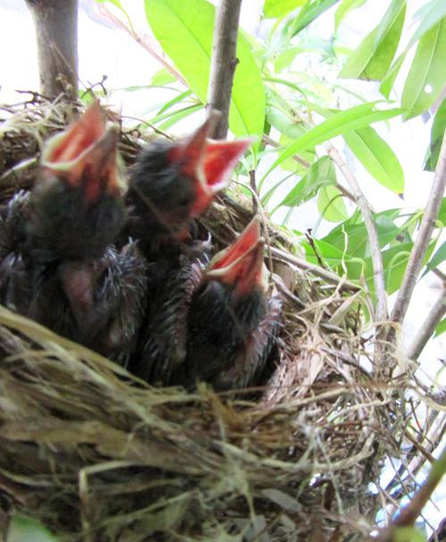 3羽とも無事に孵っているよ