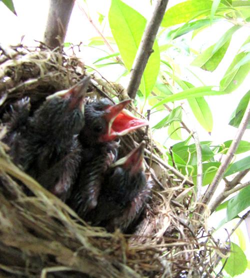 鳥の雛、成長しているよ