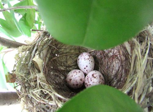鳥の巣に卵が3個