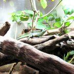 イズ― 爬虫類専門動物園に行きました!アクセスや所要時間など【伊豆 河津】