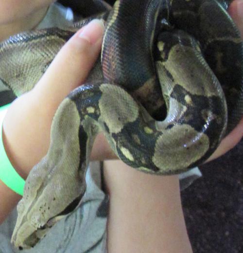 イズーで触れるヘビさん