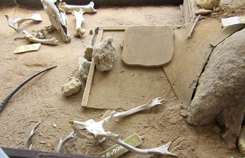 伊豆アニマルキングダム角や骨がお子さまに人気