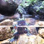 Kawazooカワズー、河津(伊豆)でいろんなカエルたちに会える!アクセスや詳細。