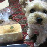 panya芦屋(ぱんやあしや)の食パンの感想と詳細。販売先や口コミは?